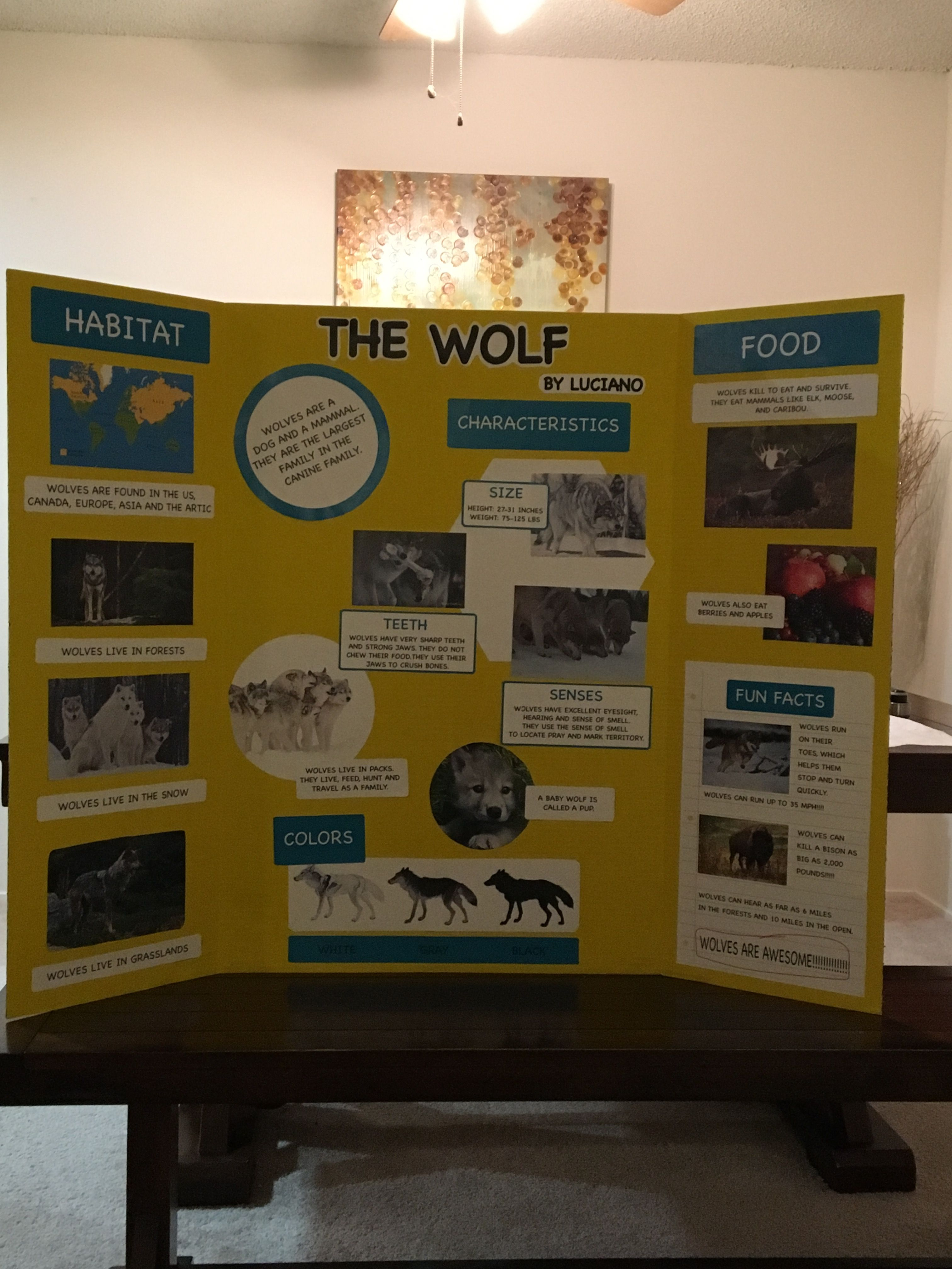 animal wolf report trifold board poster 3rd grade