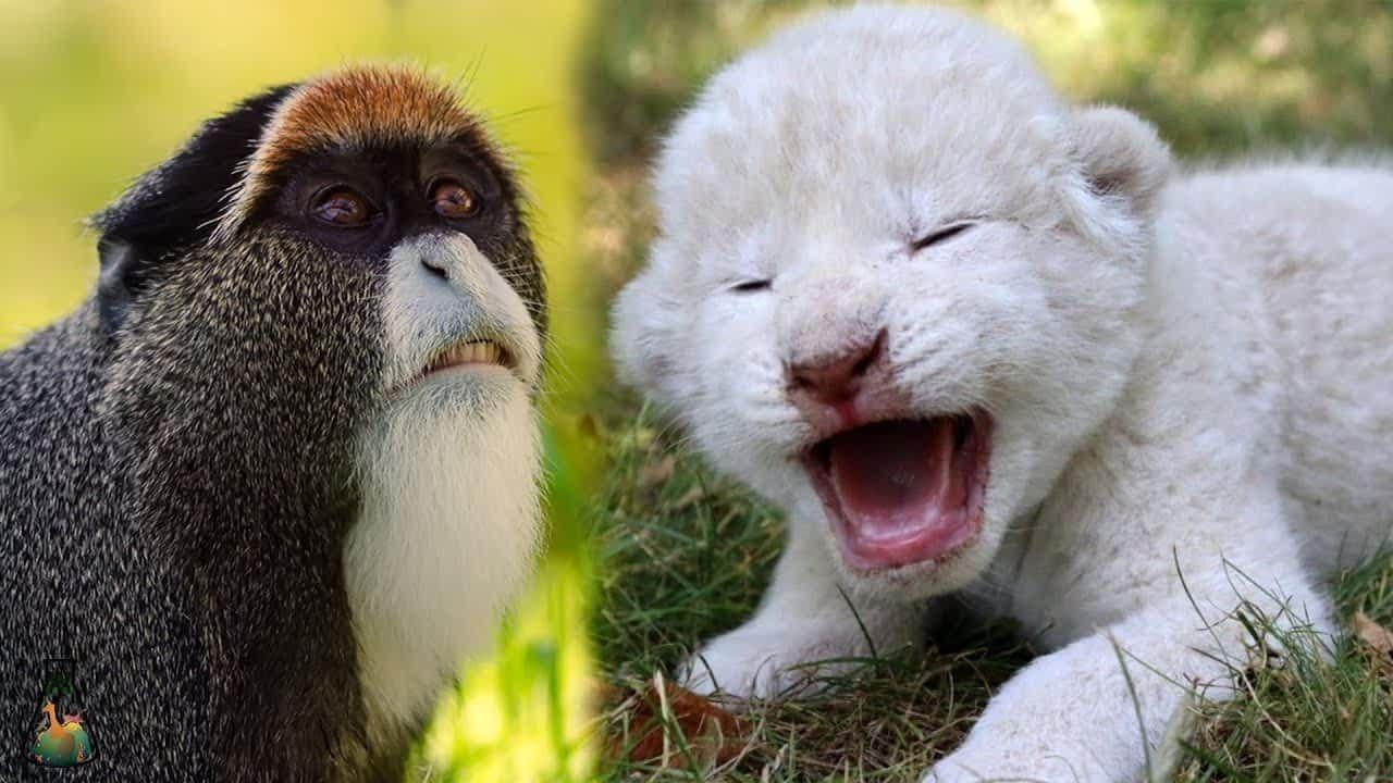 بينهم قرد وخنفساء أغلى 10 حيوانات في العالم Baby Animals Cute Baby Animals Cute Babies