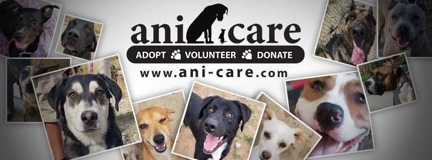 Ani Care Animal Shelter Animal Shelter Animal Shelter Volunteer