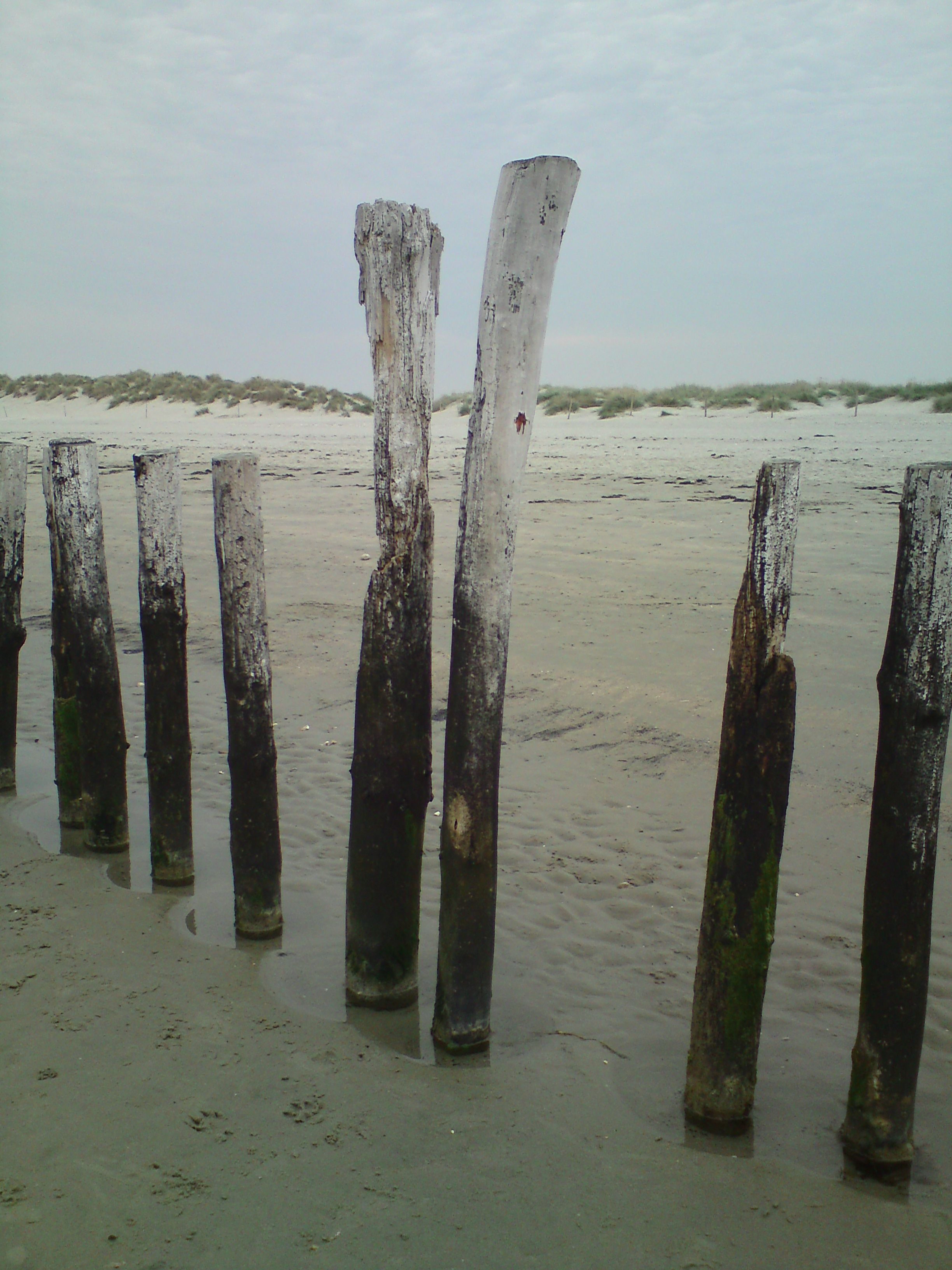 Old groynes at West Wittering. My photo.
