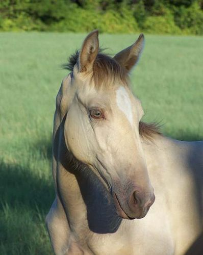 Photo Friday Tennessee Walking Horse Horses Tennessee Walking