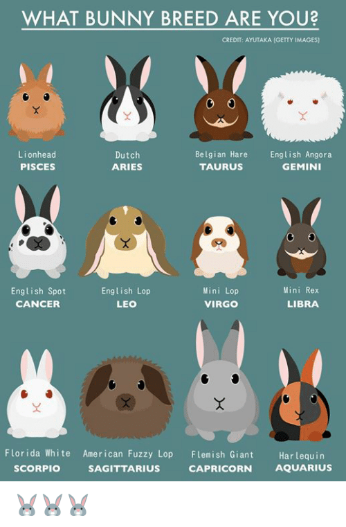 Memes American And Aquarius What Bunny Breed Are You