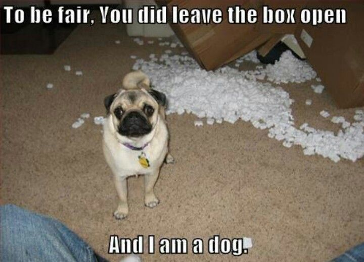 Cute Things Dogs Say Dog Quotes Funny Pugs Funny Funny Dog