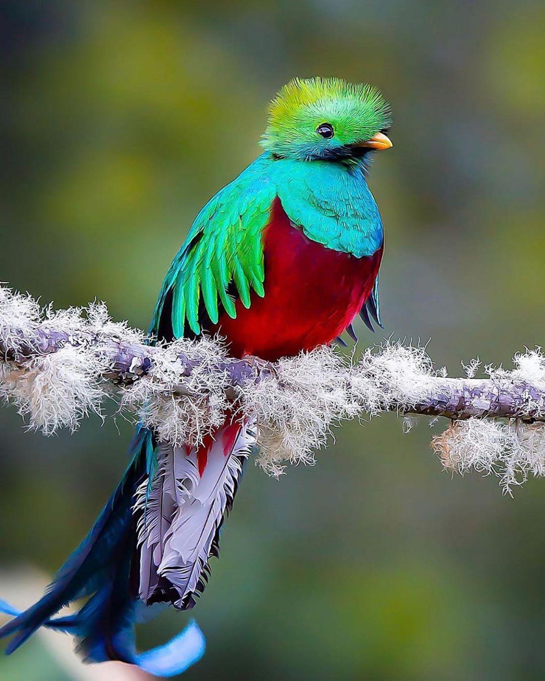 приснились красивые птицы яркие разных цветов можно нюхать