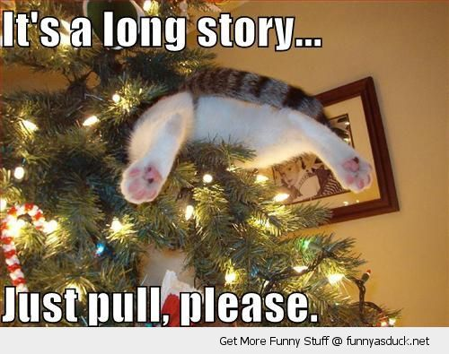 Funny Xmas Memes : Funny christmas animal pictures to share it s a long story