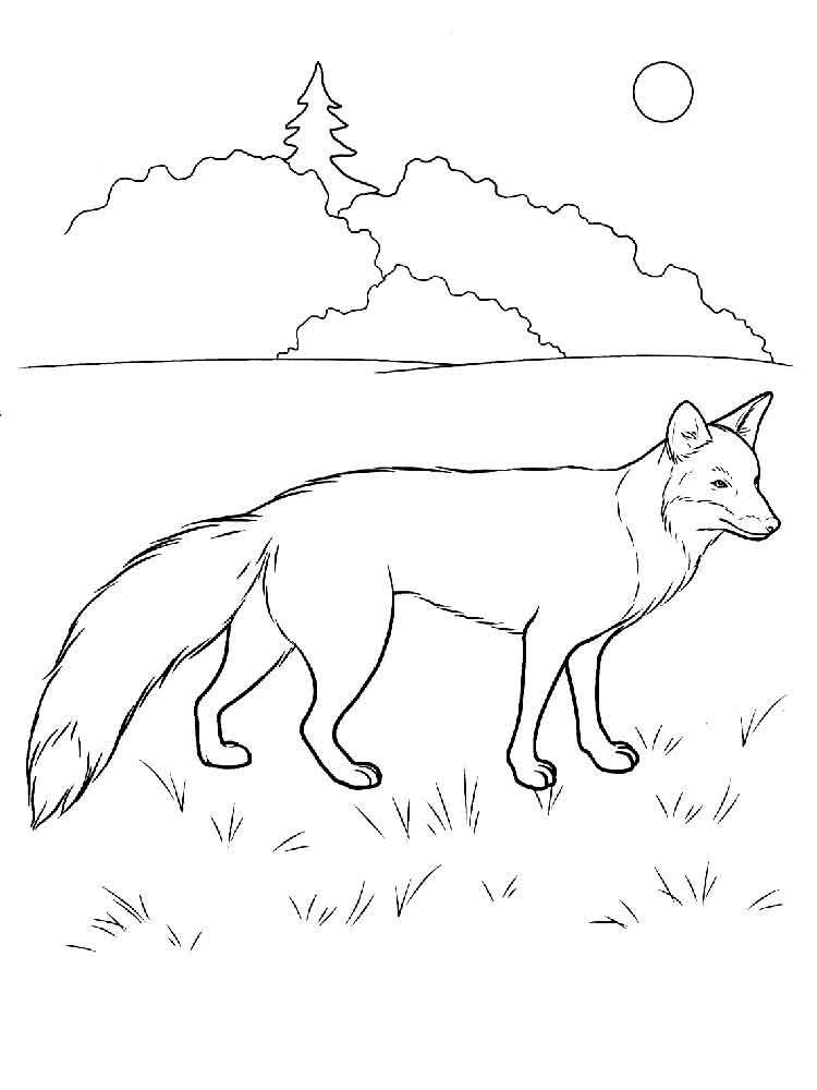 Fox Coloring Pages Fox Coloring Page Coloring Pages Fox Pictures