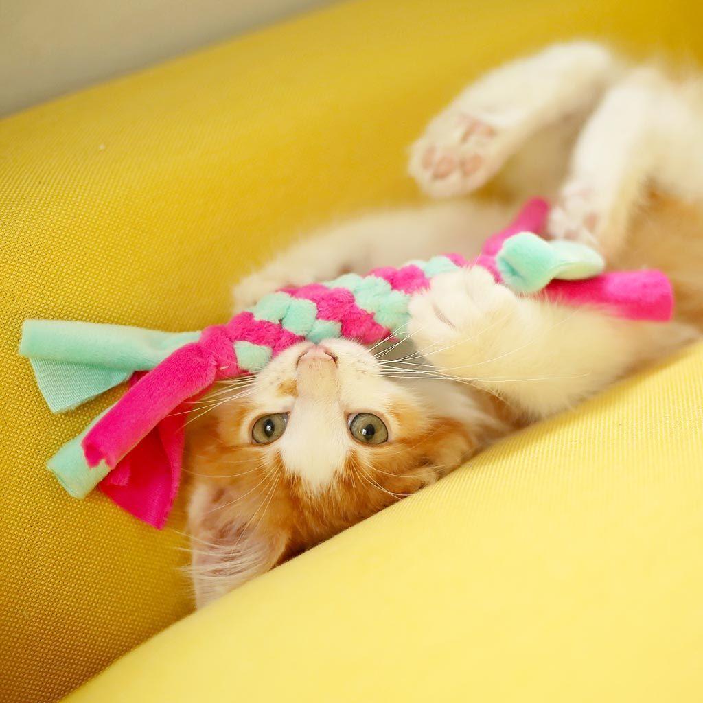 Katzenspielzeug Selber Machen Mini Zergel Diy Kullaloo Katzenspielzeug Selber Machen Mini Zergel Diy In 2020 Cat Toys Homemade Cat Toys Diy Stuffed Animals