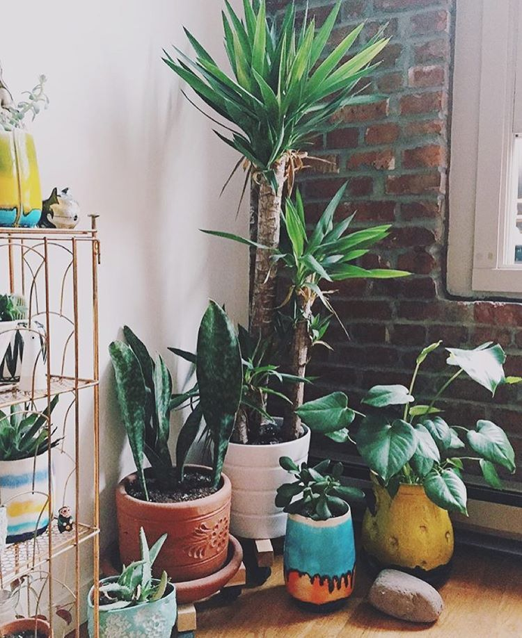 """""""Good Morning!! Oh yes! @jojotastic's plant collection and eclectic mix of quirky vessels are looking MIGHTY fine -- from the #jungalowstyle feed! """""""