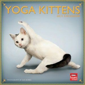 2013 yoga kittens mini 7x7  too cute with images  cat