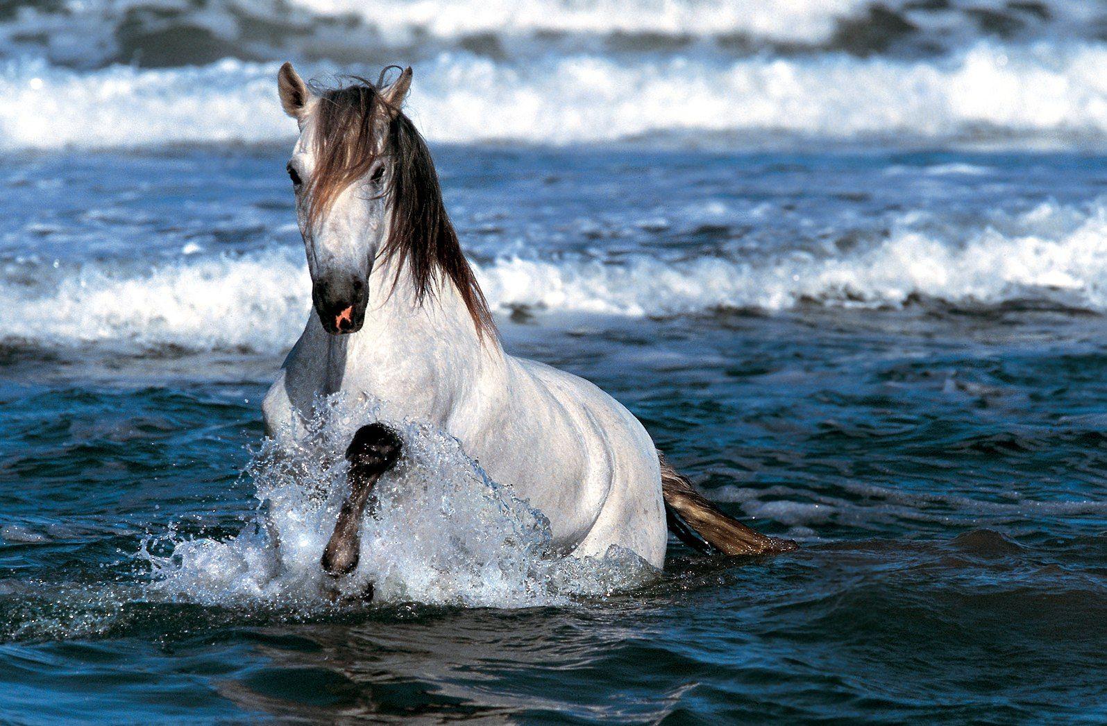 Top Wallpaper Horse Water - 53b87a3c5b104fd8a3f9125cb6bade3d  Snapshot_956387.jpg