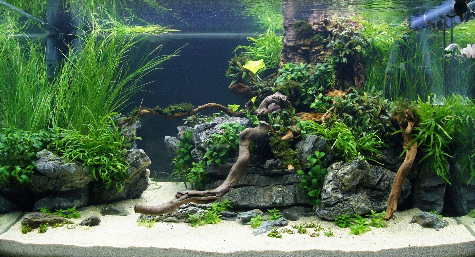 дизайн аквариума с камнями фото ощущение