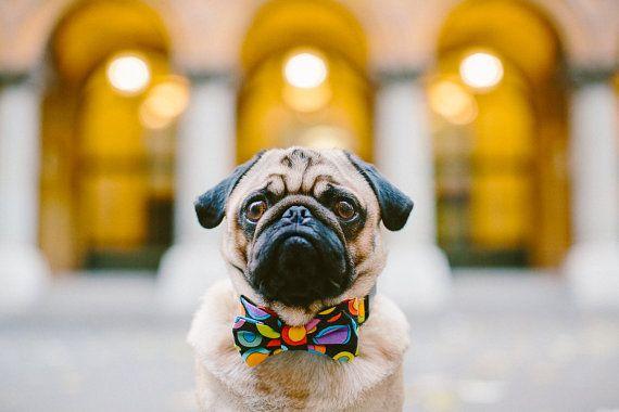 Dog Circles Bow Tie Dog Bowtie Dog Bows Bow Tie Collar