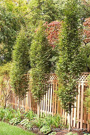 Top Ten Trees For Small Gardens