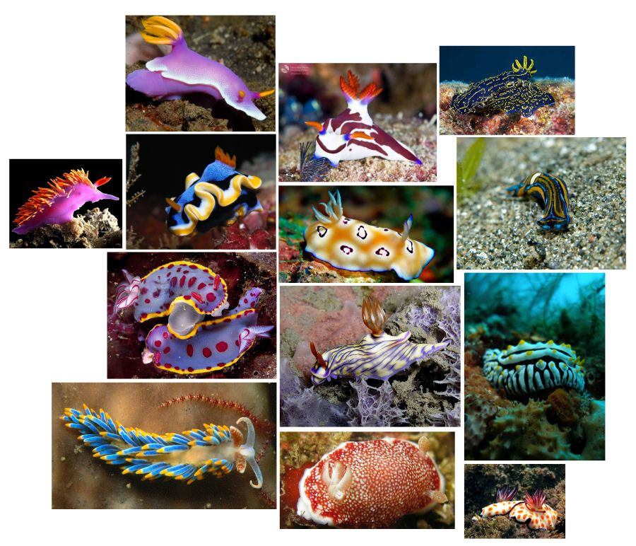A collection of sea slugs. I loathe slugs, but these creatures are so colorful and unusual! There are ugly plain brown sea slugs, too, and those seem to be popular in Chinese soup.