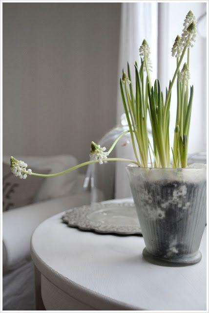 white muscari in glass (swedish website)