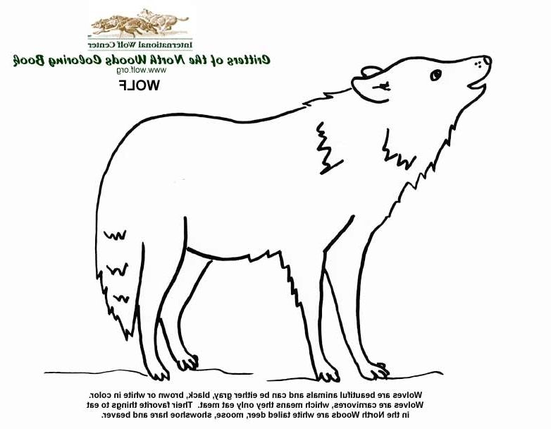 Wolves Coloring Book