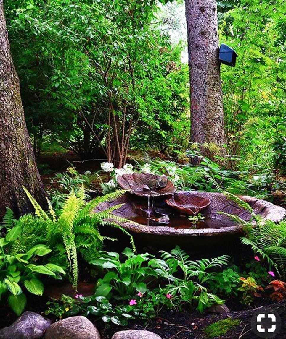 Pin By Sherry Allnutt On Shade Garden Ideas