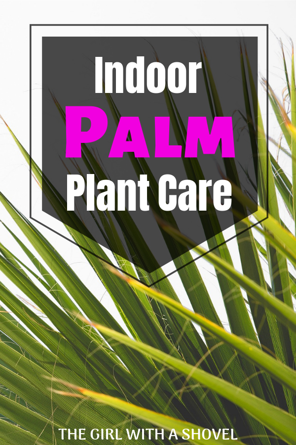 Palm Plant Care