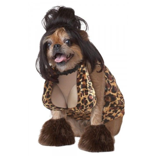 Disfraces Para Perros Pet Halloween Costumes Bad Halloween