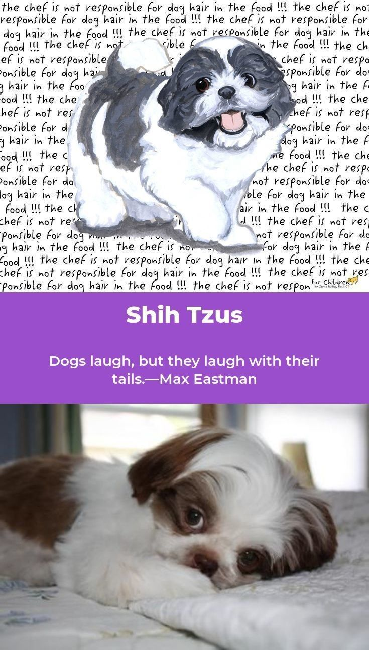 Pin on Shih Tzu Dog are awesome!