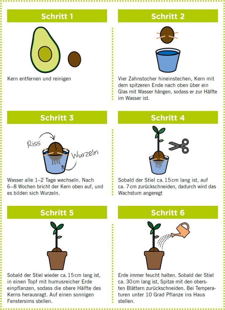Avocado anpflanzen,  #anpflanzen #Avocado #herbgardenideaschildren