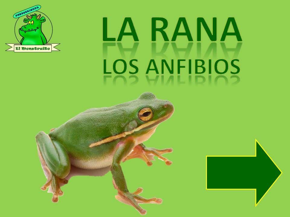 El Monstruito en Monteagudo: Nuevo proyecto: La rana. Los anfibios.
