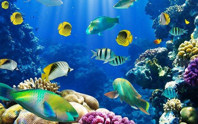 Arrecife De Coral Peces Naturaleza Exotica Fondo De Pantalla Fondo De Pantalla De Peces Fondos De Pantalla Gratis Fondo De Pecera