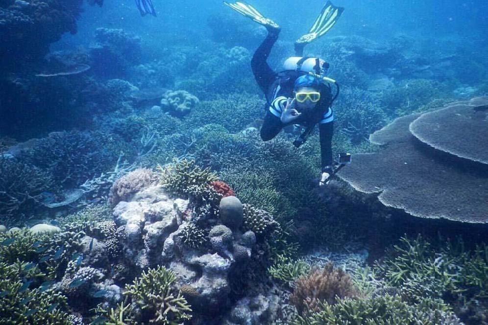 Twal Teluk Kupang Ntt Fotografi Bawah Air Konservasi Menyelam