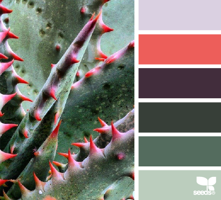 Aloe Spectrum - http://design-seeds.com/home/entry/aloe-spectrum
