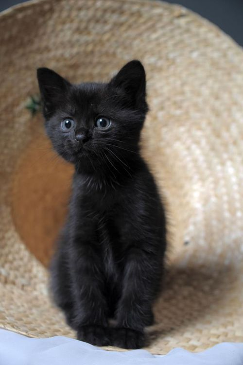 These Kittens Will Make You Amazed Cats Are Wonderful Creatures