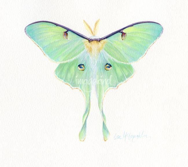 Stunning Luna Moths Artwork For Sale On Fine Art Prints Moth Art Moth Art Print Luna Moth Tattoo