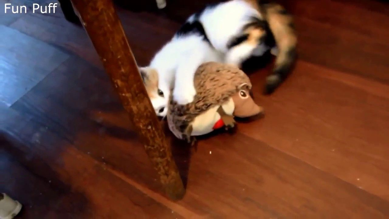 Kitten Playing With a Toy ► Fun Puff