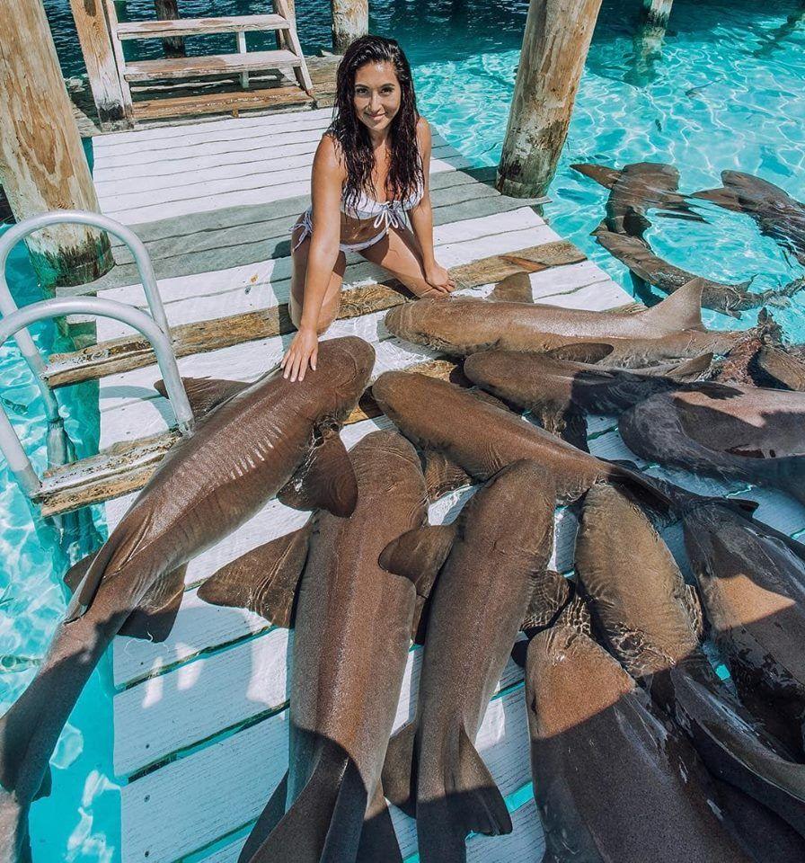 Pin By Gaby ¸¸. ` Zabala. On Tiburones Bebe
