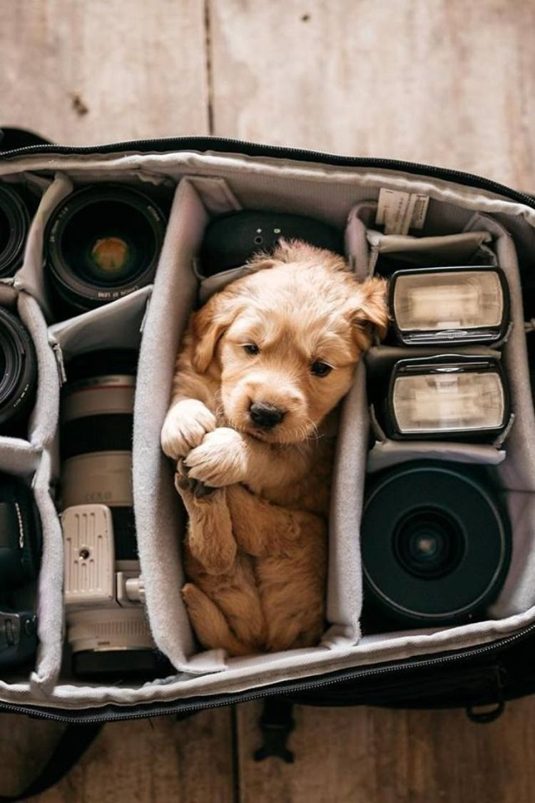 21 Incredibly Adorable Puppies! #cutepuppies