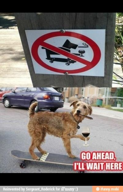 No Cigar Smoking Martini Drinking Skateboarding Dogs Happiness