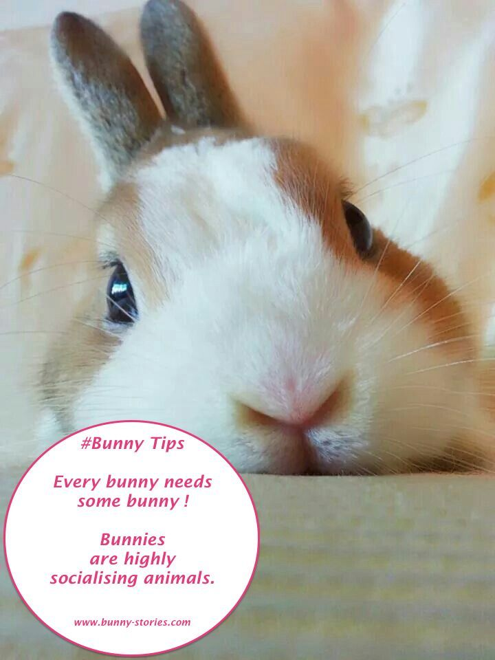 Every #bunny needs some bunny. #Rabbits are highly socialising animals. See more at: http://bunny-stories.com