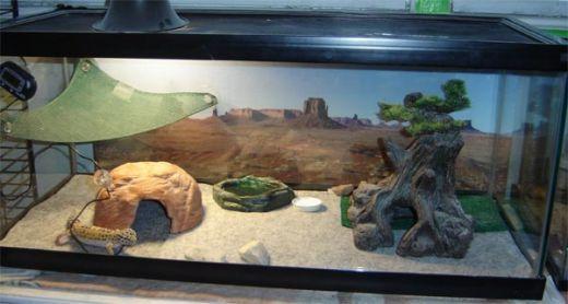 Housing Leopard Geckos On Sand The Great Debate Gecko