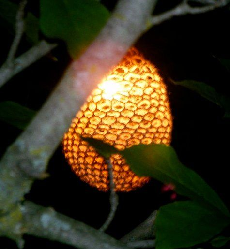 I don't know how to crochet, but these would look good hanging from my trees in the backyard. They look like glowing honeycomb