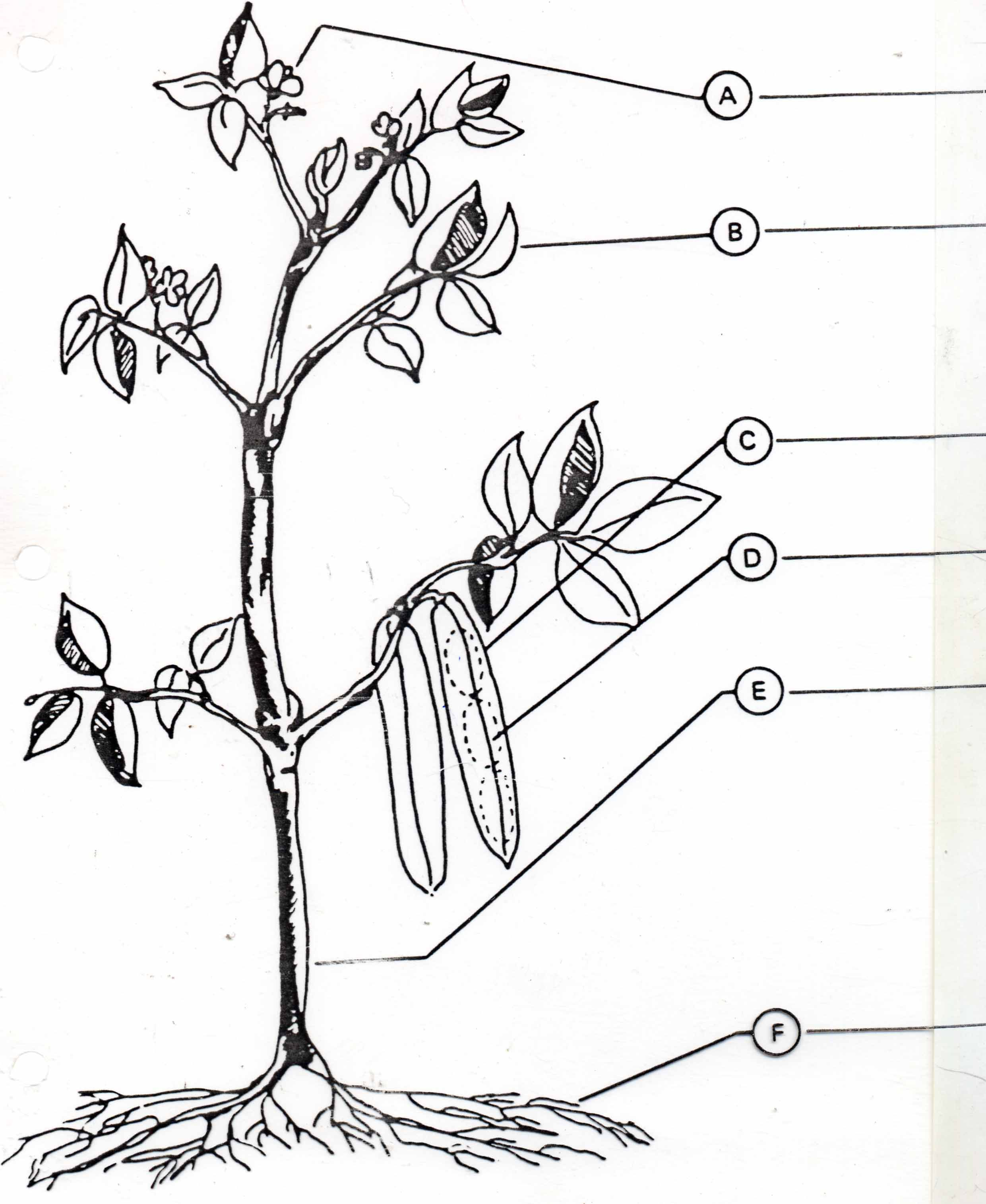 Plant Parts Worksheets