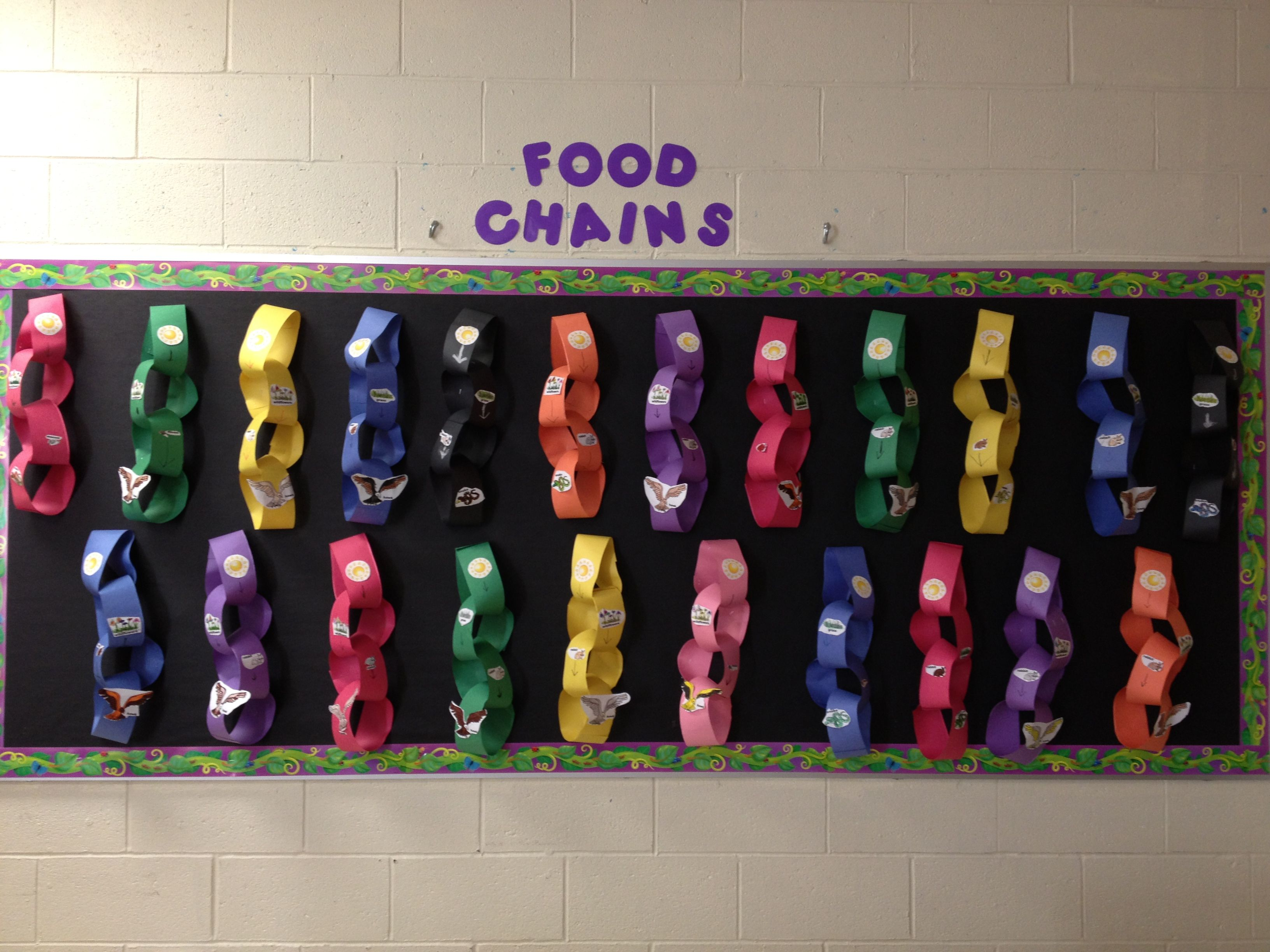 Food Chains Display This Is An Activity That Students Can