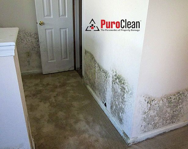 Moldy Drywall In Bristol Pa Home
