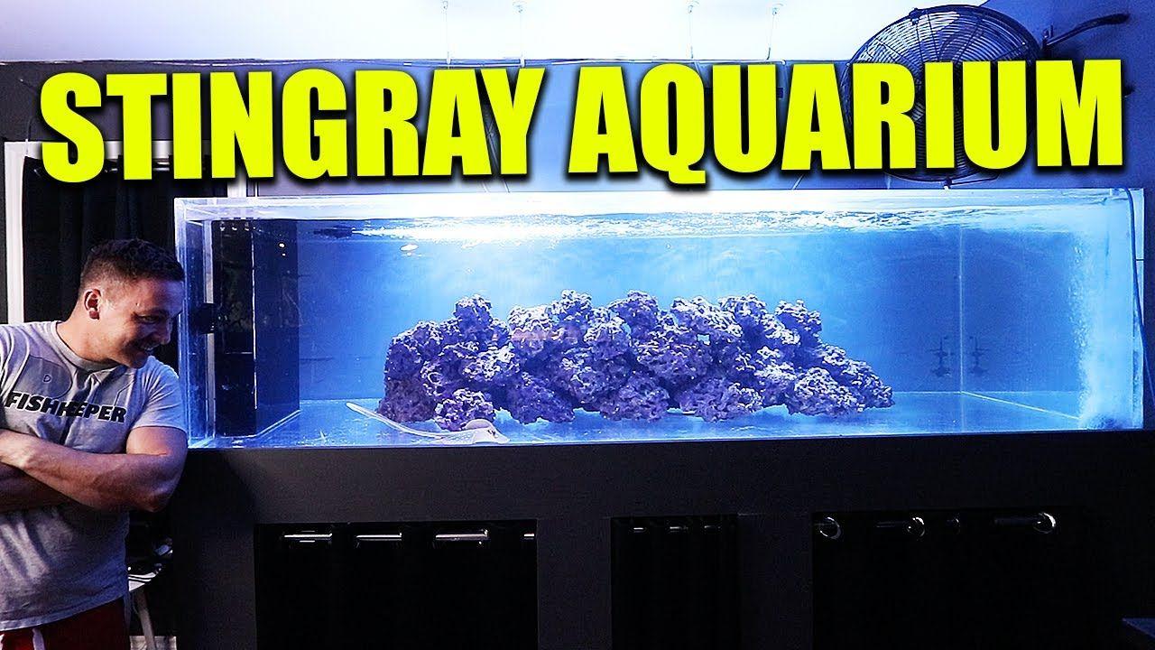 Aquariums My Saltwater Stingray Aquarium The King Of Diy Aquarium Stingray Diy Aquarium
