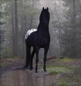View of horse in the rain in the mountains. Feel free to copy/paste for puter backdrops and such!