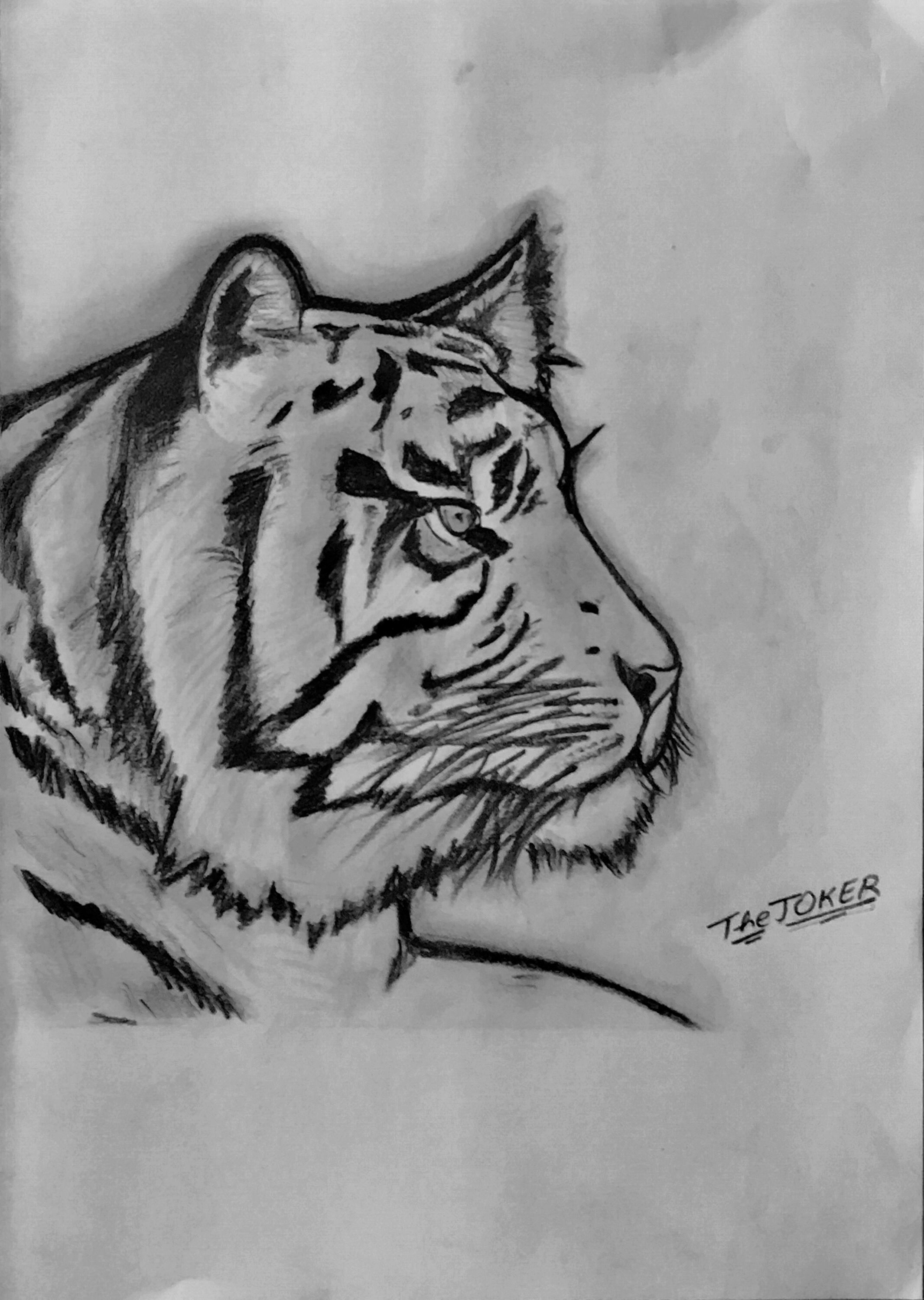 He Who Rides A Tiger Is Afraid To Dismount.  TheJOKER #savetigers #sketch
