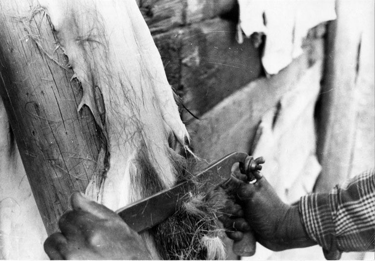 I used to flesh them by hand Appalachian History Deer