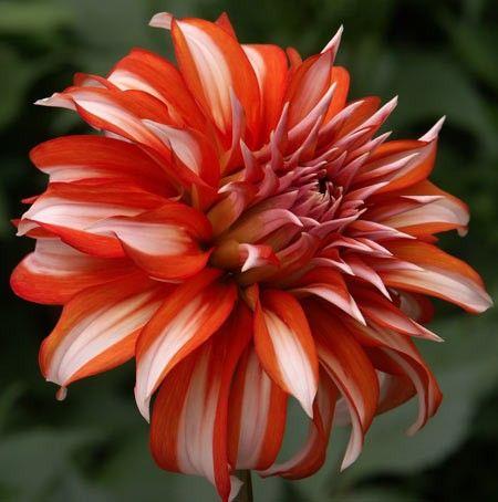 Catalog Advanced Search Amazing Flowers Beautiful Gardens Flower Garden