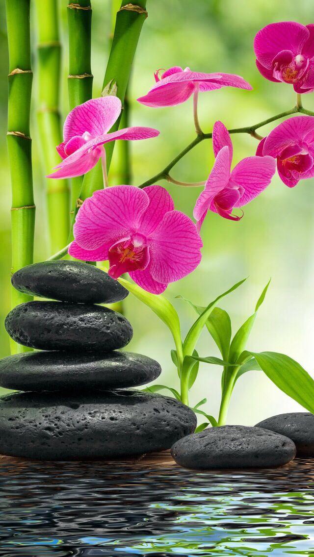 Nature Wallpaper Iphone Paysage Zen Fond D Ecran Orchidee Peinture Zen