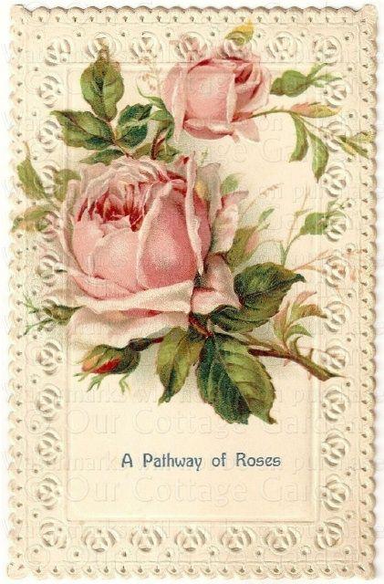 Antique Roses | Antique ROSES Postcards LACE Borders
