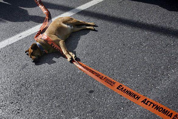 """En Grecia, hay un perro que no ha faltado a casi ninguna de las manifestaciones en Atenas, """"Kanelos"""" se llama, aunque se cree que ese noble y revoltoso can ya murió a la tierna edad de 17 años (84 años de humano) y que su sucesor ahora se llama """"Lukánicos"""". También se cree que es el mismo perro de todas las manifestaciones, aunque con distintos nombres"""
