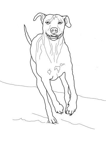 rhodesian ridgeback coloring page dog
